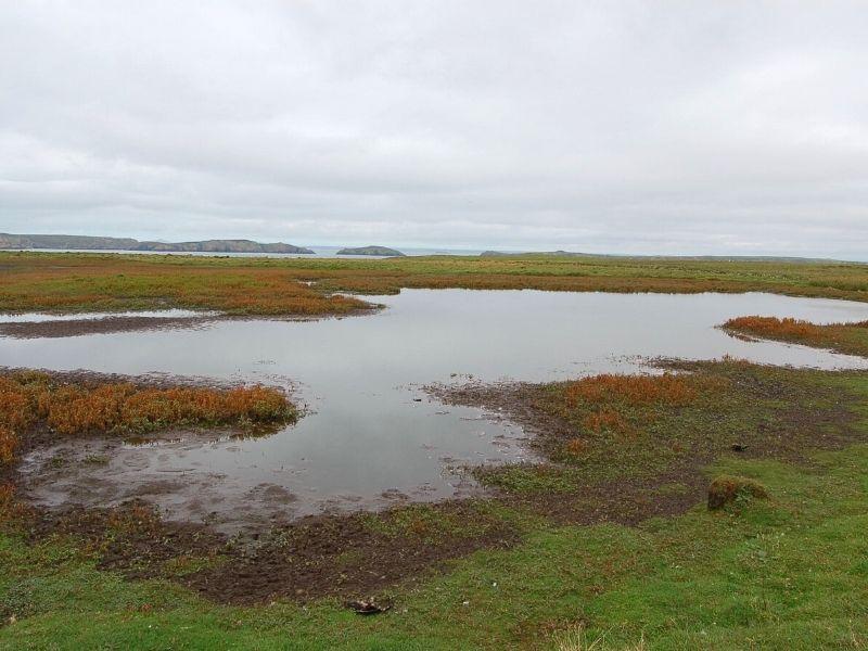 Prince's Pond Skokholm